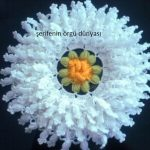 papatya-lif-orgu-modeli-kopyala